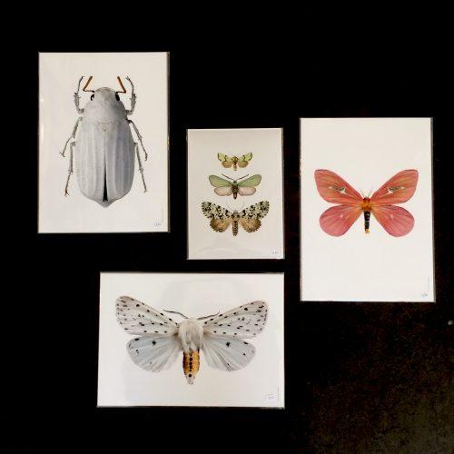 Liljeberg_insecten_1-dejavu