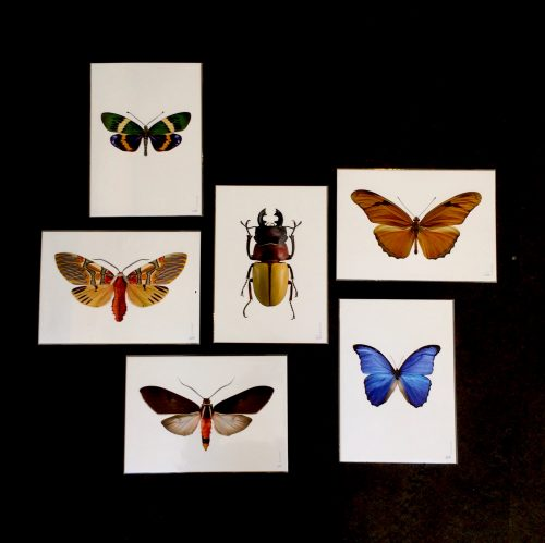 Liljeberg_insecten_2-dejavu