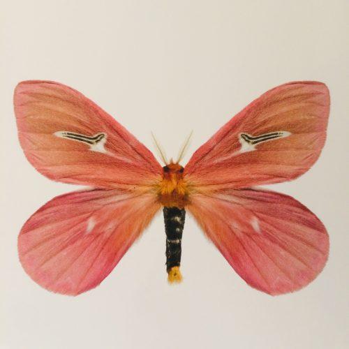 Liljeberg_vlinder_dejavu