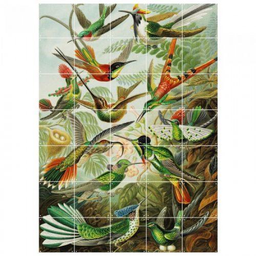 ixxi_hummingbirds2_dejavu